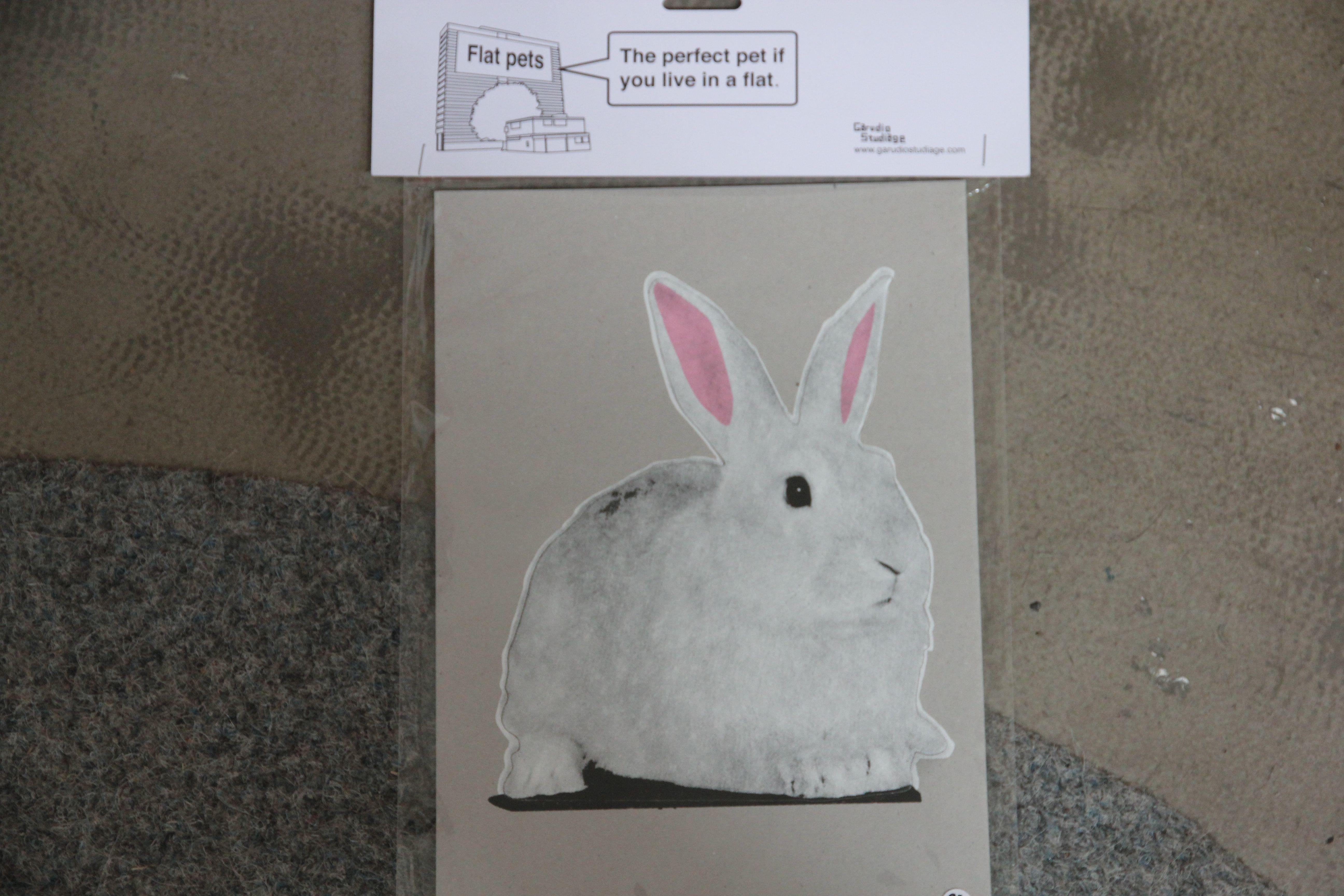 flat pet rabbit / marre des épinards